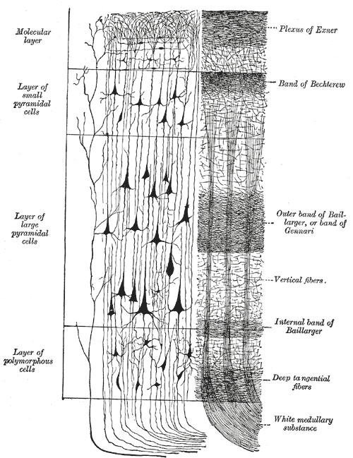 Drawing showing layer structure