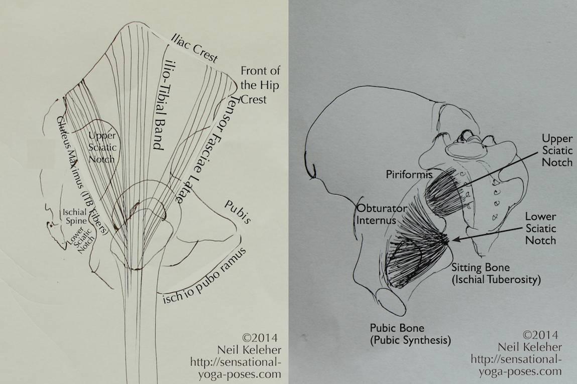 Posterior View Of Pelvis Manual Guide